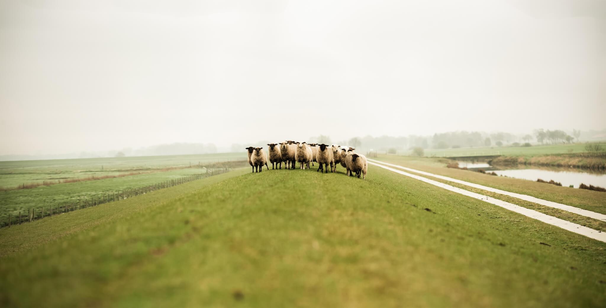 Follow the leader - Photo by Pablo Heimplatz