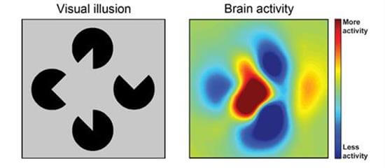 Attention to a visual illusion and the fMRI results